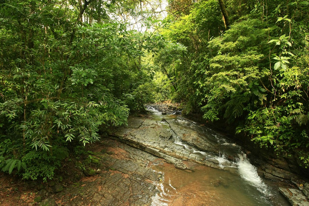 Vista de un sector del parque La Cangreja tomada a unos 80 kilómetros de San José (Costa Rica) EFE