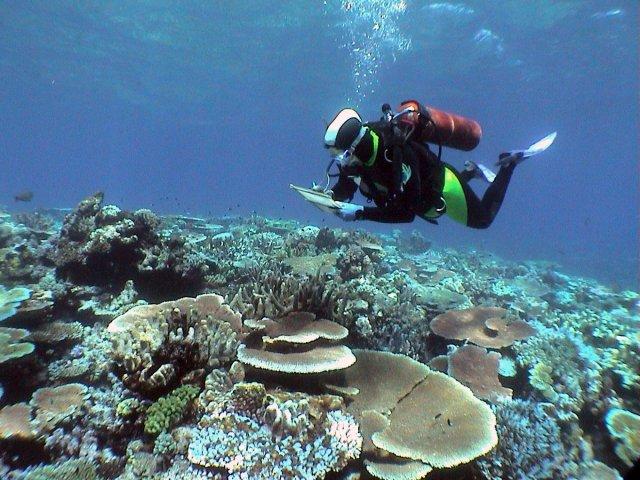 th_73d9f63cbf68d5d7391d41bb4dcbecbf_Australia-Coral
