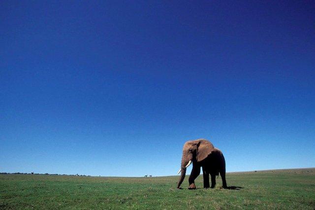 elefantes efe