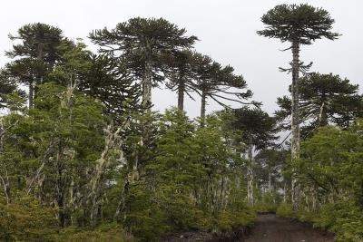 bosquesnativos
