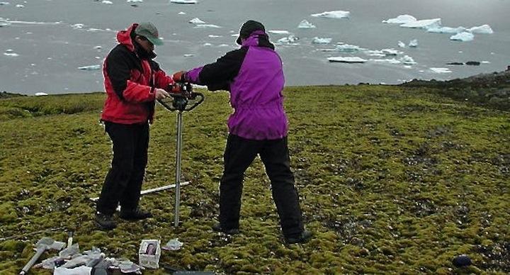 Musgo-Antartida-revive-1500-anos