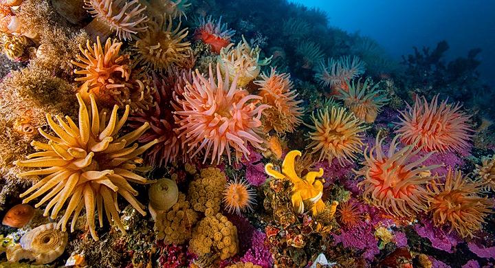 Declive-corales-caribe
