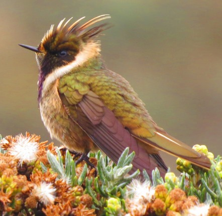 Nueva especie en Colombia