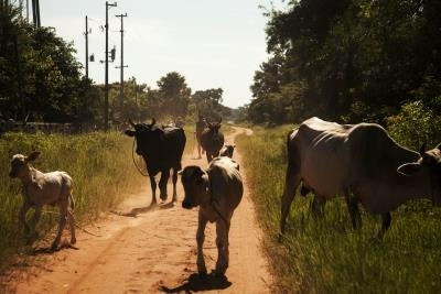 PARAGUAY_ANIMALES
