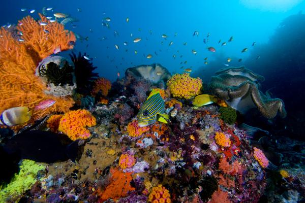 corales_caribe