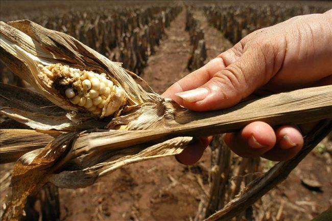 Países ayudarán a Guatemala en la lucha contra la sequía