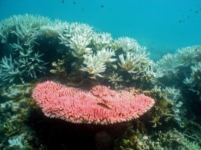 coral_australia