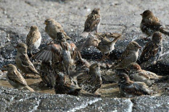 fauna_migratoria2