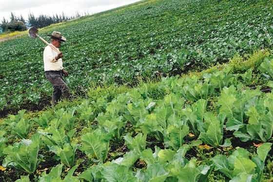 agriculturta_cambio_climatico