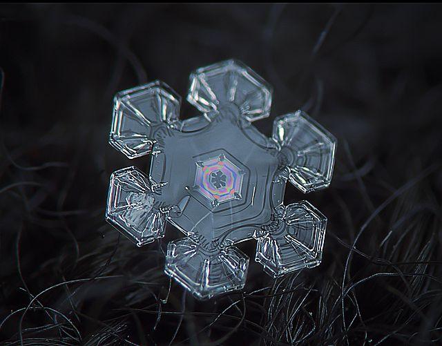 copo_nieve