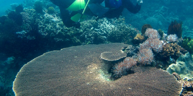 corales_oceano