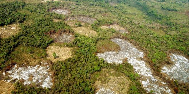 deforestacion_empresas