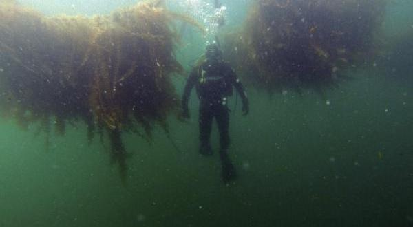 algas_aguas_contaminadas