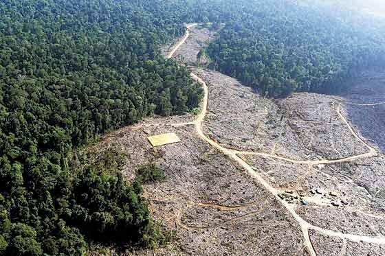 mapa_deforestacion